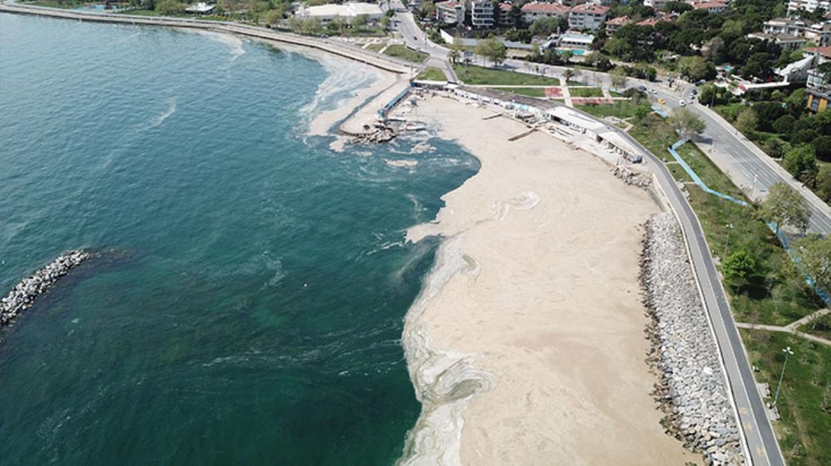 Marmara Denizi'ndeki balıklarla ilgili çarpıcı araştırma! İlk gelen veriler uzmanları telaşlandırdı