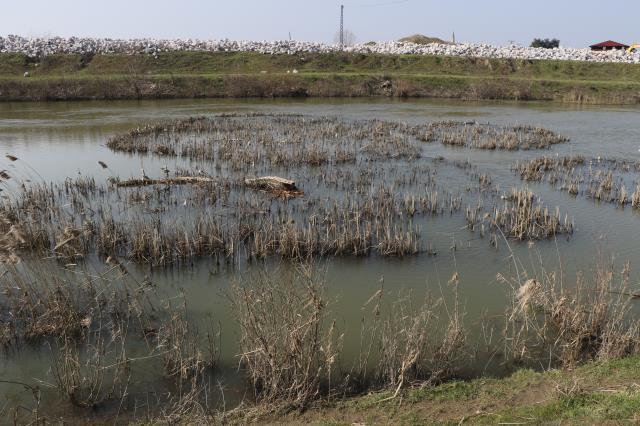 Sel sonrasında ortaya çıkan istilacı su maymunları, Edirne halkını tedirgin etti